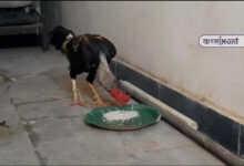 Photo of খুনের মামলায় মোরগকে আটক করল পুলিশ! পেশ করা হবে আদালতে