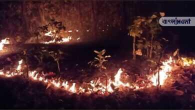 Photo of ভয়াবহ অগ্নিকান্ড ওড়িশার সিমলিপাল উদ্যানে, ১০ দিন ধরে দাউ দাউ করে জ্বলছে উদ্যান