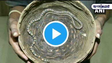 Photo of উড়িষ্যায় খোঁজ পাওয়া গেল বিরল প্রজাতির উড়ন্ত সাপ, দেখুন ভিডিও