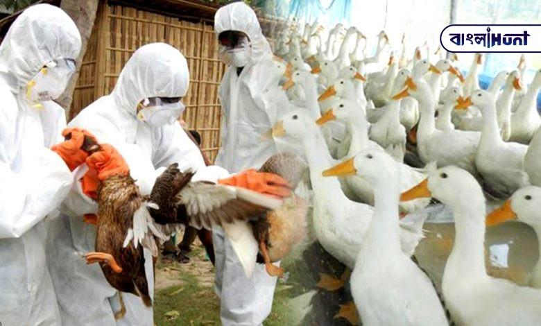 Kerala government decided to kill 50,000 ducks