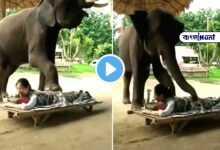 Photo of Viral video: বডি ম্যাসাজ করে দিচ্ছে এক হাতি! দেখেই চক্ষু চড়ক গাছ নেটপাড়ার বাসিন্দাদের