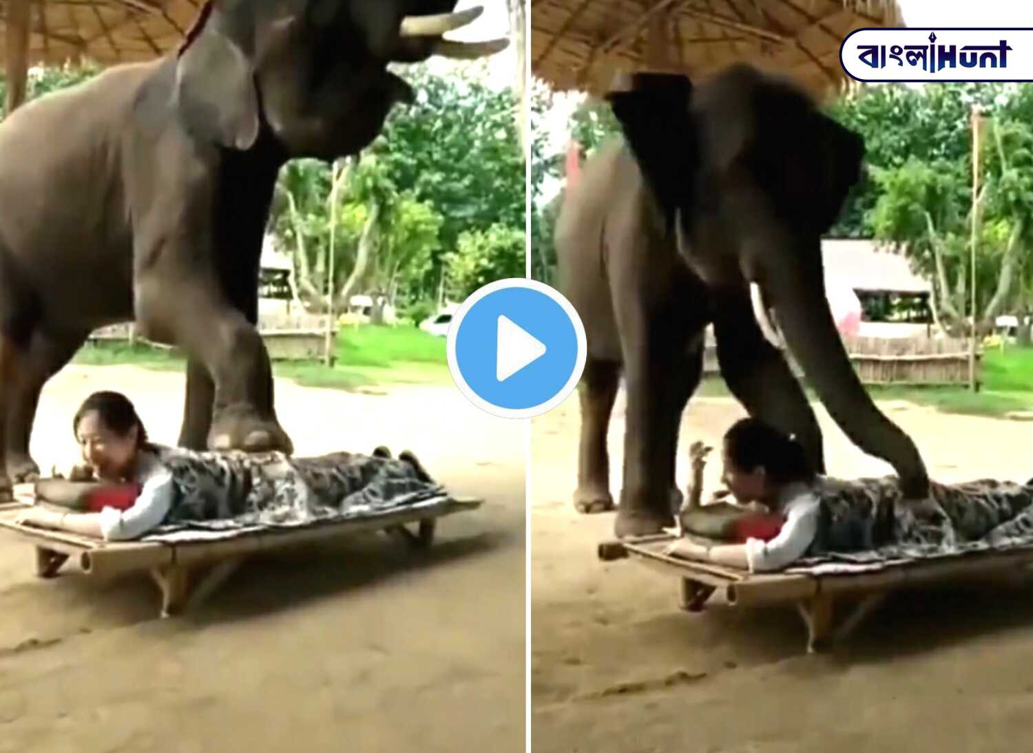 Viral video: An elephant doing body massage!
