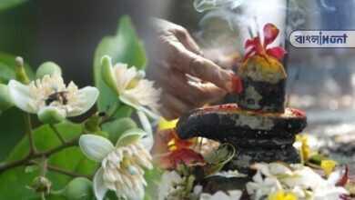 Photo of বিশেষ এই ফুল দিয়ে করুন ভগবান শিবের পুজো, পছন্দের ফুলে সন্তুষ্ট হবেন বাবা মহাদেব