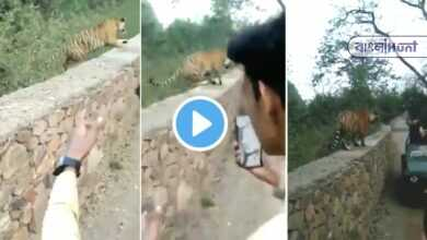 Photo of OMG! জঙ্গল ভ্রমণে আচমকাই পর্যটকদের সামনে উদয় হল বাঘ! Video viral