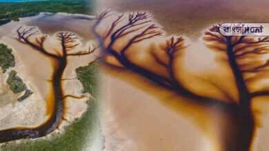 Photo of অস্ট্রেলিয়ার লেকে কিভাবে ফুটে উঠল গাছের ছবি? ভাইরাল ছবি দেখে অবাক নেটিজনরা