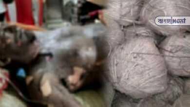 Photo of বাড়িতেই মজুত ছিল বোমা, তা ফেটে গুরতর জখম গোসাবার ফকির মোল্লা! গোপনে চলছে চিকিৎসা