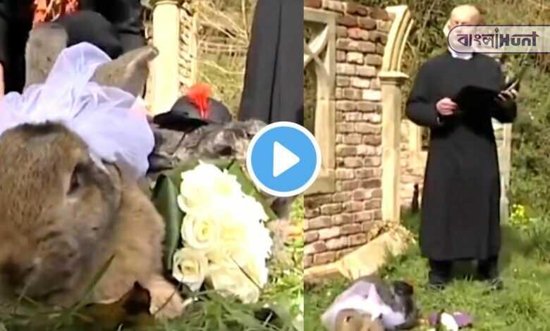 Rabbit marriage! viral video on social media