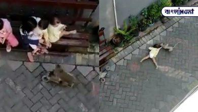 Photo of অবিশ্বাস্য! খেলনা সাইকেলে চেপে শিশু চুরির চেষ্টা বাঁদরের, তুমুল ভাইরাল ভিডিও