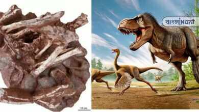 Photo of বিষ্ময়কর! এই প্রথম পাওয়া গেল ডিমের উপর বসে থাকা ডাইনোসরের জীবাশ্ম