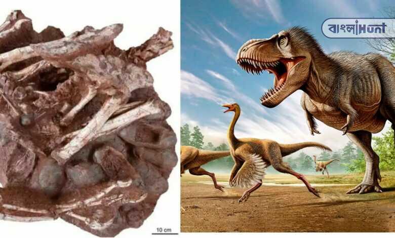 Dinosaur Found