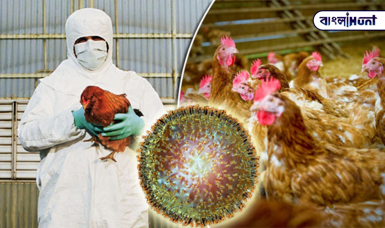 bird flu 1 Bangla Hunt Bengali News
