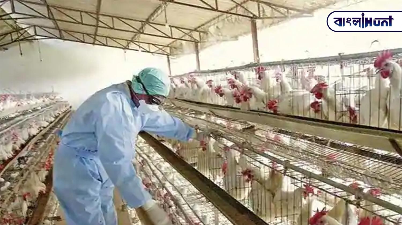 bird flu Bangla Hunt Bengali News