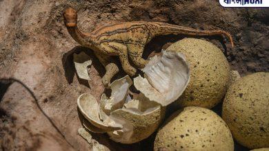 Photo of ভারতেও ছিল ডাইনোসর, মধ্যপ্রদেশে মিলল ৬৫ মিলিয়ন বছর পুরনো সাতটি বিশালাকার ডিম, অবাক বিজ্ঞানীরা