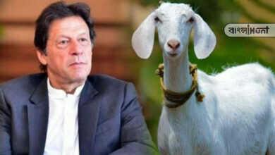 Photo of পাকিস্তানে গণধর্ষণের শিকার নিরীহ ছাগল! ইমরান খানের বিরুদ্ধে ক্ষোভে ফেটে পড়ল জনতা