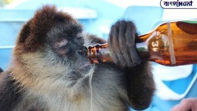 Photo of মাতাল বাঁদরের আক্রমণের শিকার ২৫০ জন, দেওয়া হল যাবজ্জীবন কারাদণ্ড